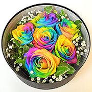 rainbowrosebox5000