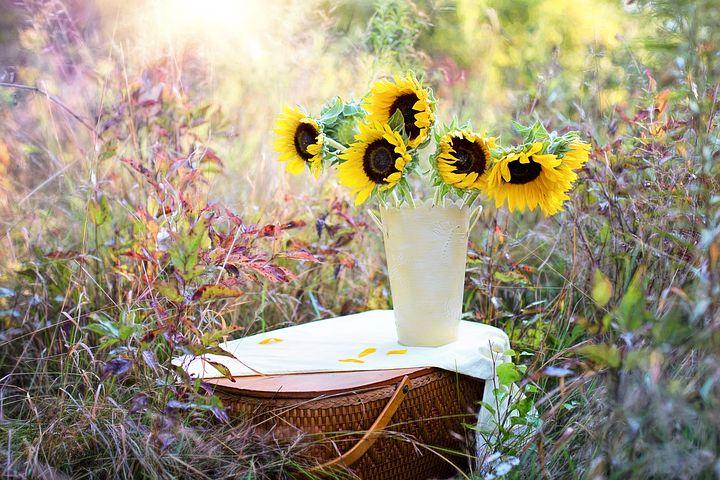 sunflowers-1719119__480