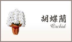 スタンド花 お祝い 胡蝶蘭